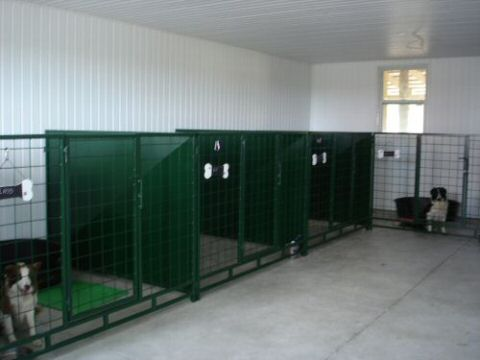 kennels at our dog camp and boarding kennel